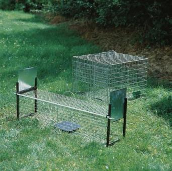 Erie-Falle für Rabenvögel