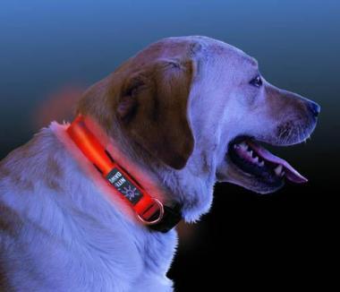 LED-Hundehalsband